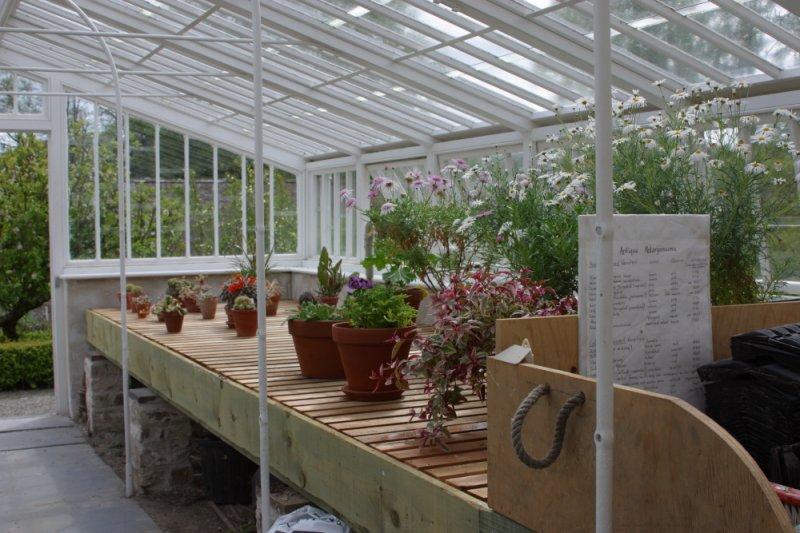 LlanerchaeronGreenhouse4
